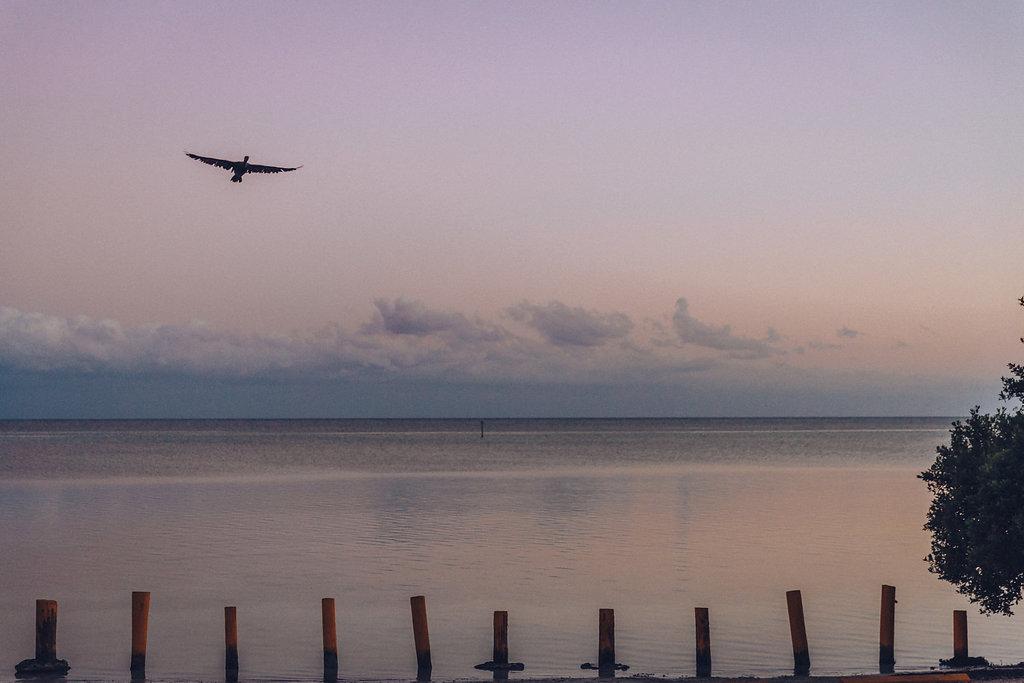 Il tramonto e un gabbiano che vola