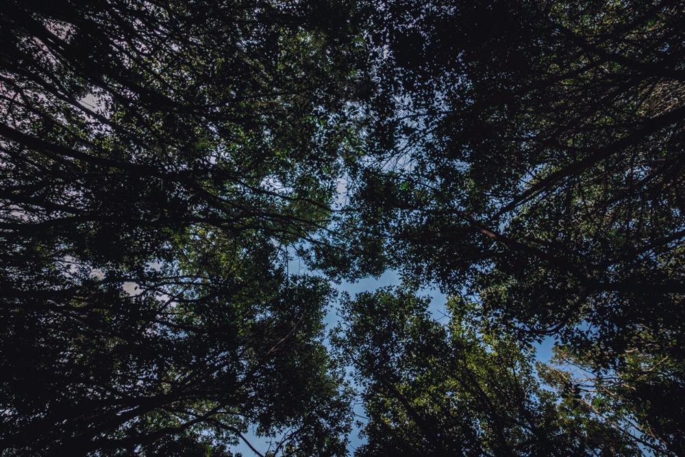 Le foreste di laurisilva, la Gomera
