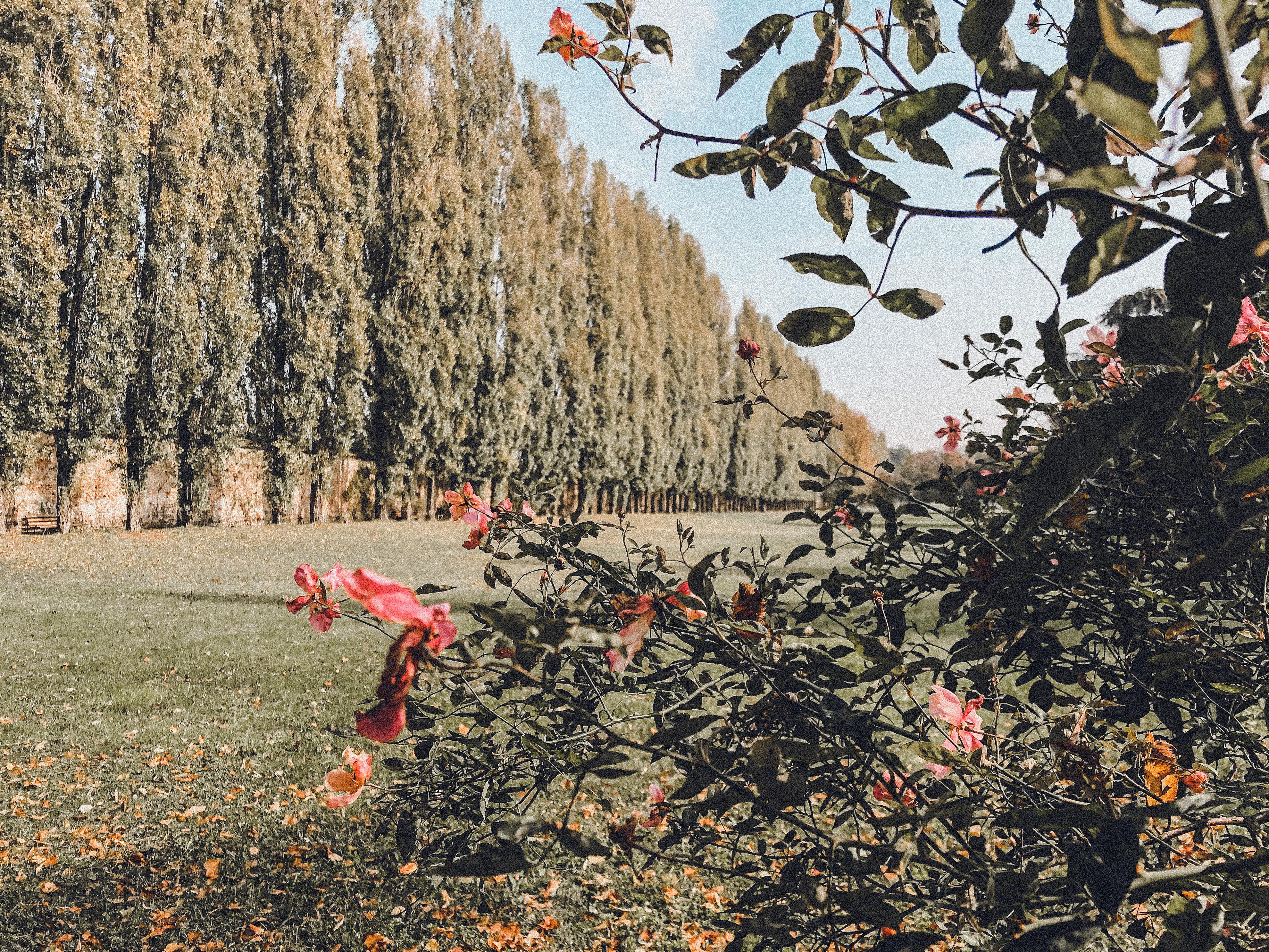 Il giardino di Palazzo Arese Borromeo