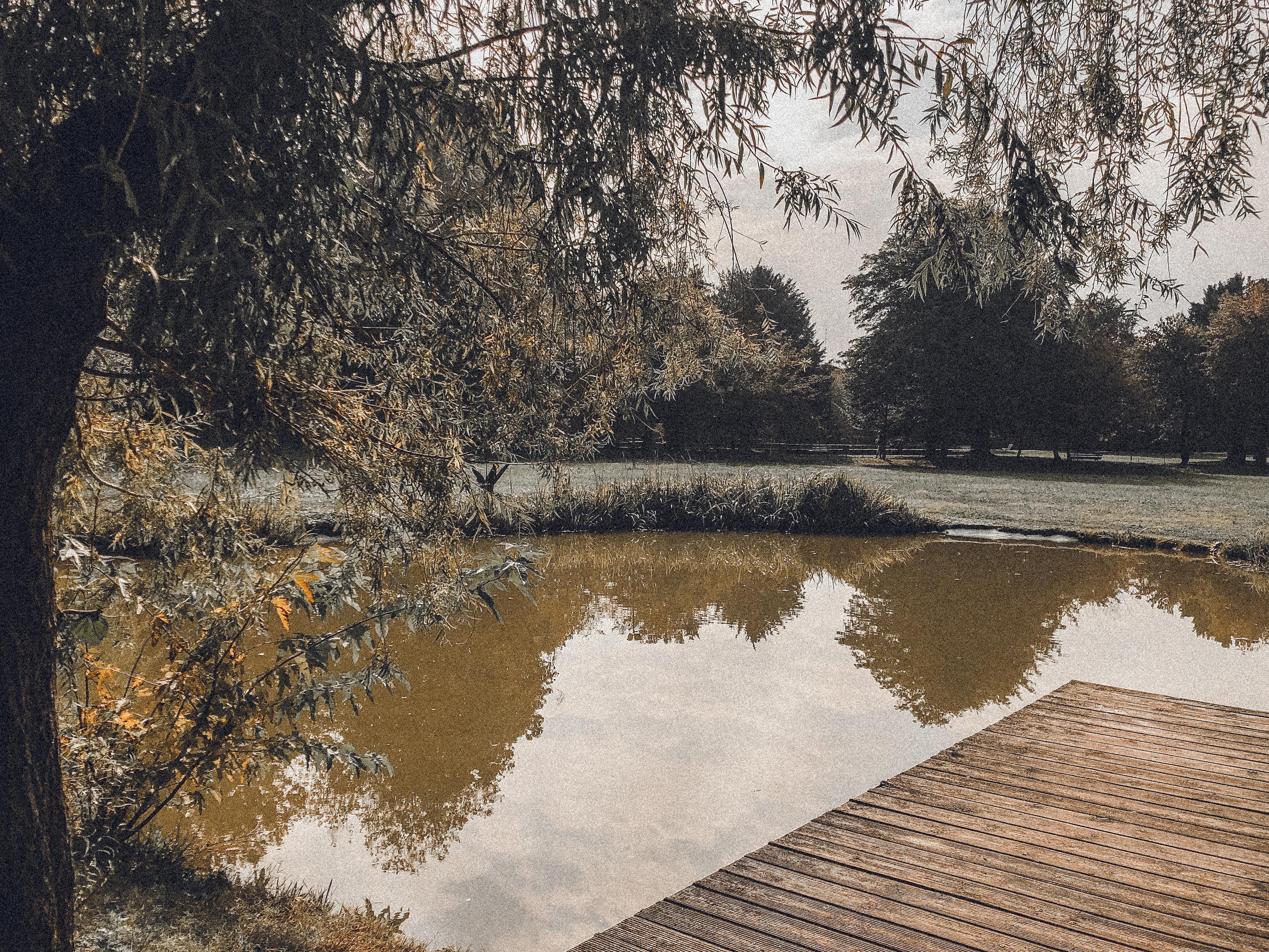 Il lago del giardino